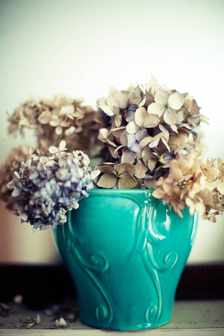 19-DriedHydrangeas-3-copy
